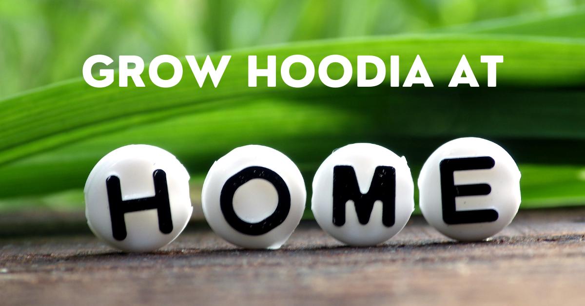 grow Hoodia at Home
